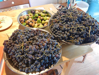 Grapes and Tomatillos for preservation