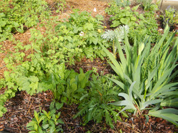 Polyculture planting