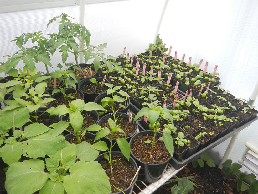 Plants in our Nursery in May