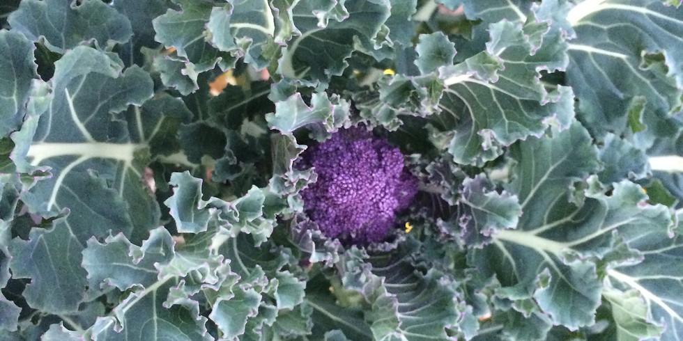 Plant Sale featuring Cool Season Veggies