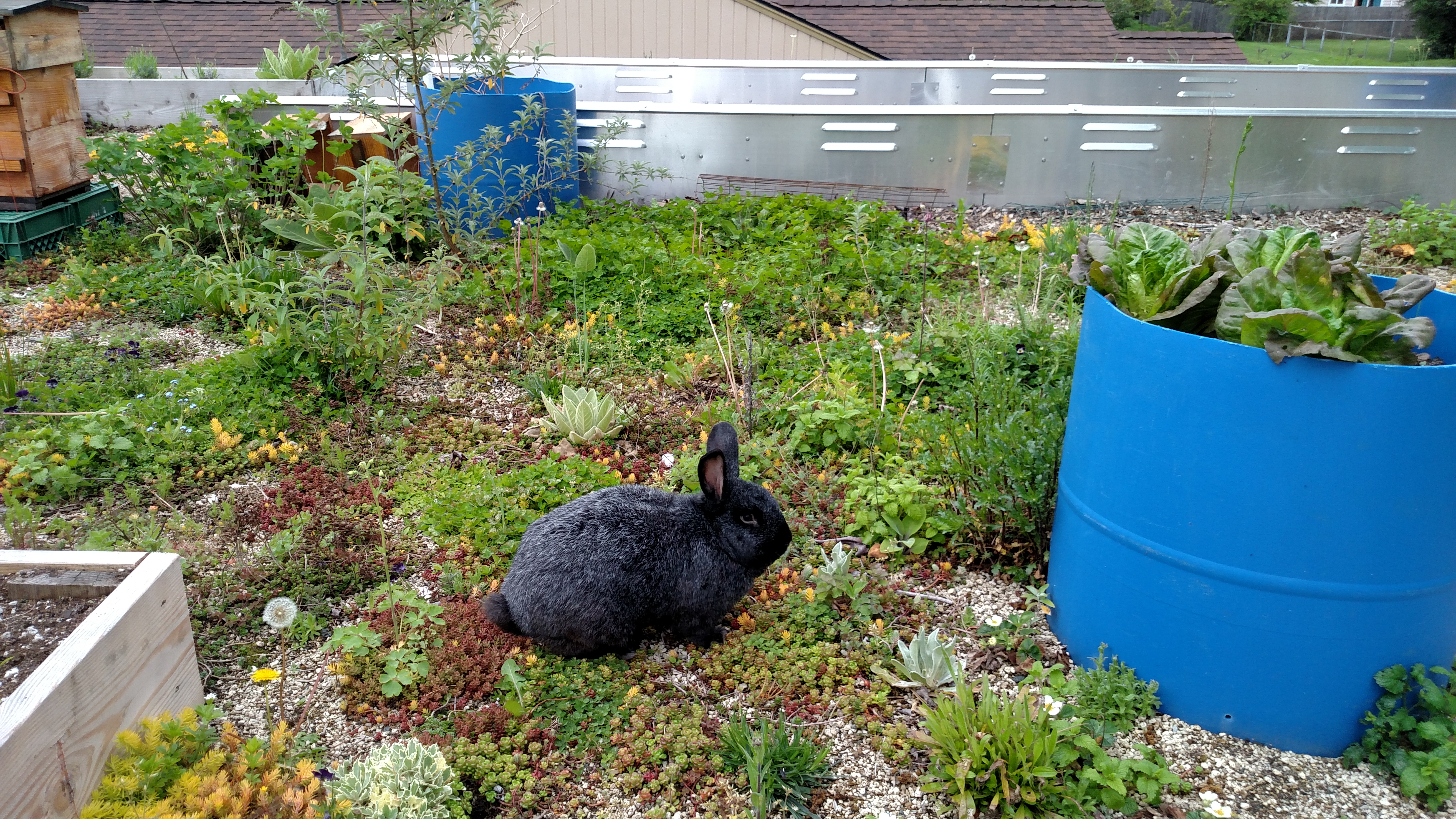 bunny on roof