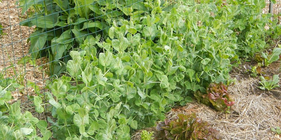 Indoor Seedstarting, Early Season Plantings, and Perennial Vegetables