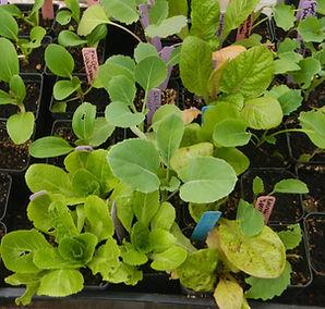 Veggie Starts CSA Package