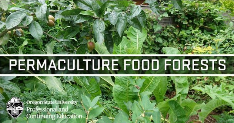 Permaculture Food Forests