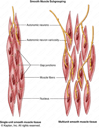 Smooth Muscle Subgrouping