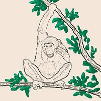 chimpanzee_image_IUBS.png