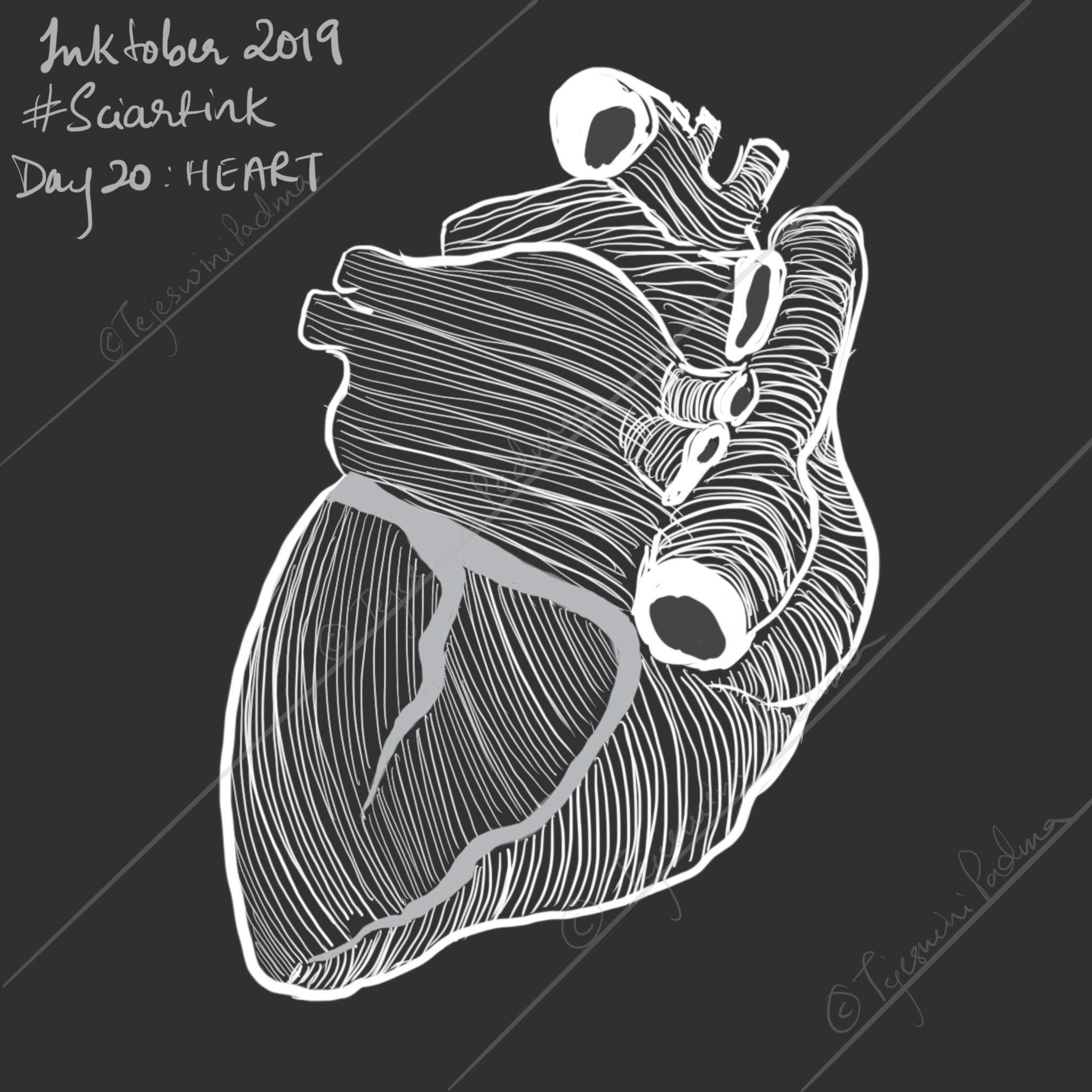20_Inktober_2019_Heart
