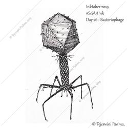 26_Inktober_2019_Bacteriophage