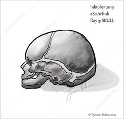 #3 Skull