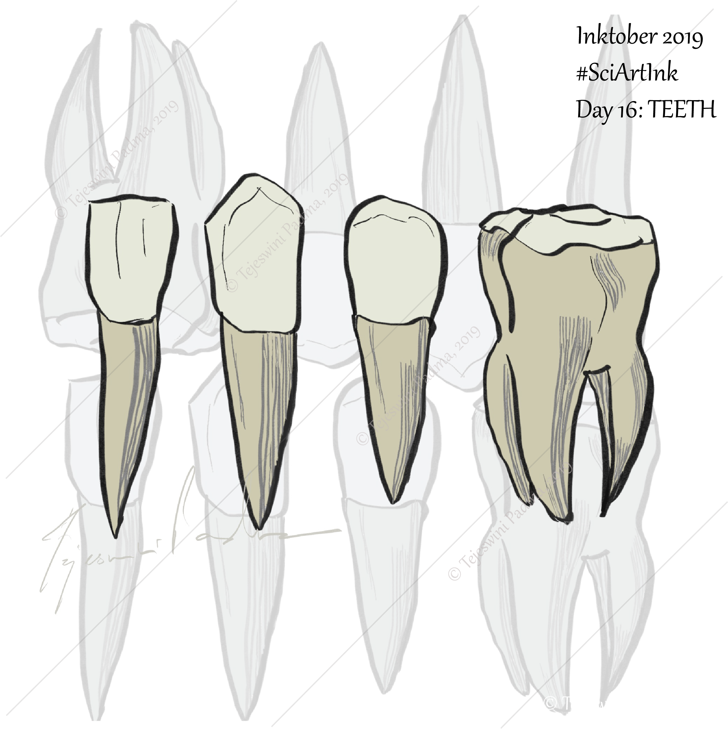 #16 Teeth