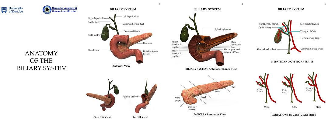 Biliary_Tree_Final.jpg