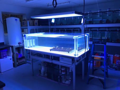 UNE Coral Lab