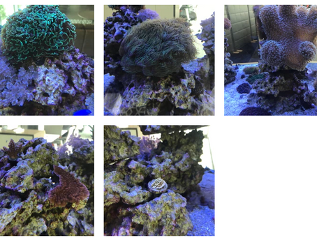 700 Gallon Reef Tank Update