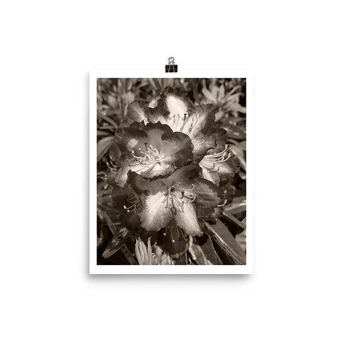 Ins 24 2019 Photoprint