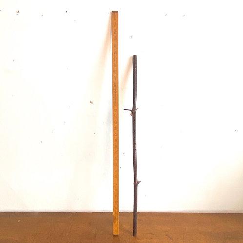 Unusual Stick 'Flute'