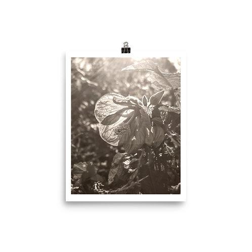 Ins 10 2019 Photoprint