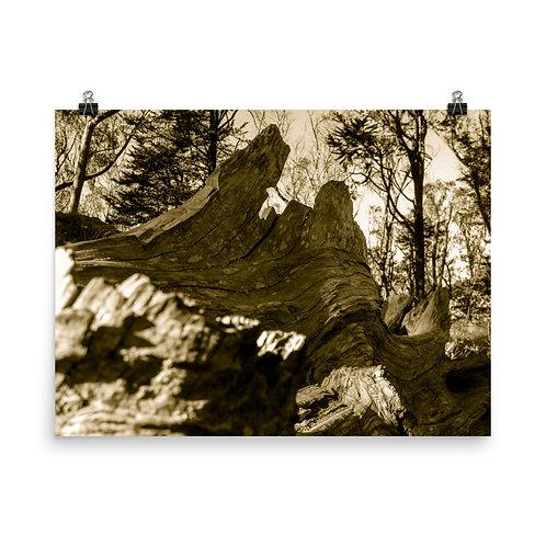 98 Inca Gold Photoprint