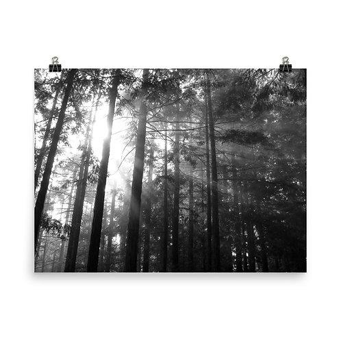 29. B.C. Photoprint