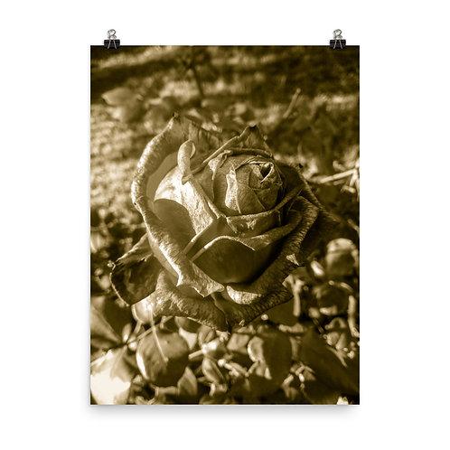 91 Inca Gold Photoprint