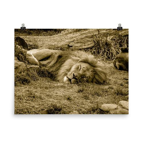 21 Inca Gold Photoprint