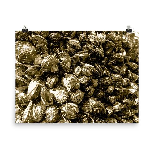 25 Inca Gold Photoprint
