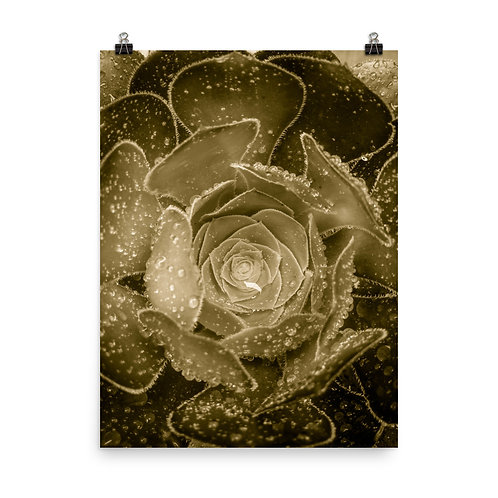 35 Inca Gold Photoprint