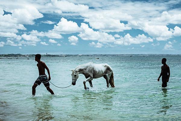 Cavalos Marinhos_Rodrigo Garcia - Rodrig