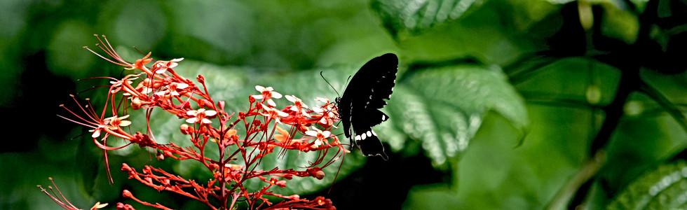 Life's Nectar I