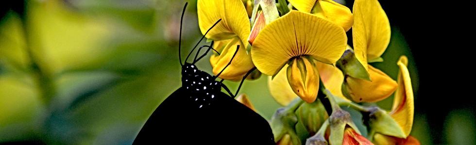 Life's Nectar II