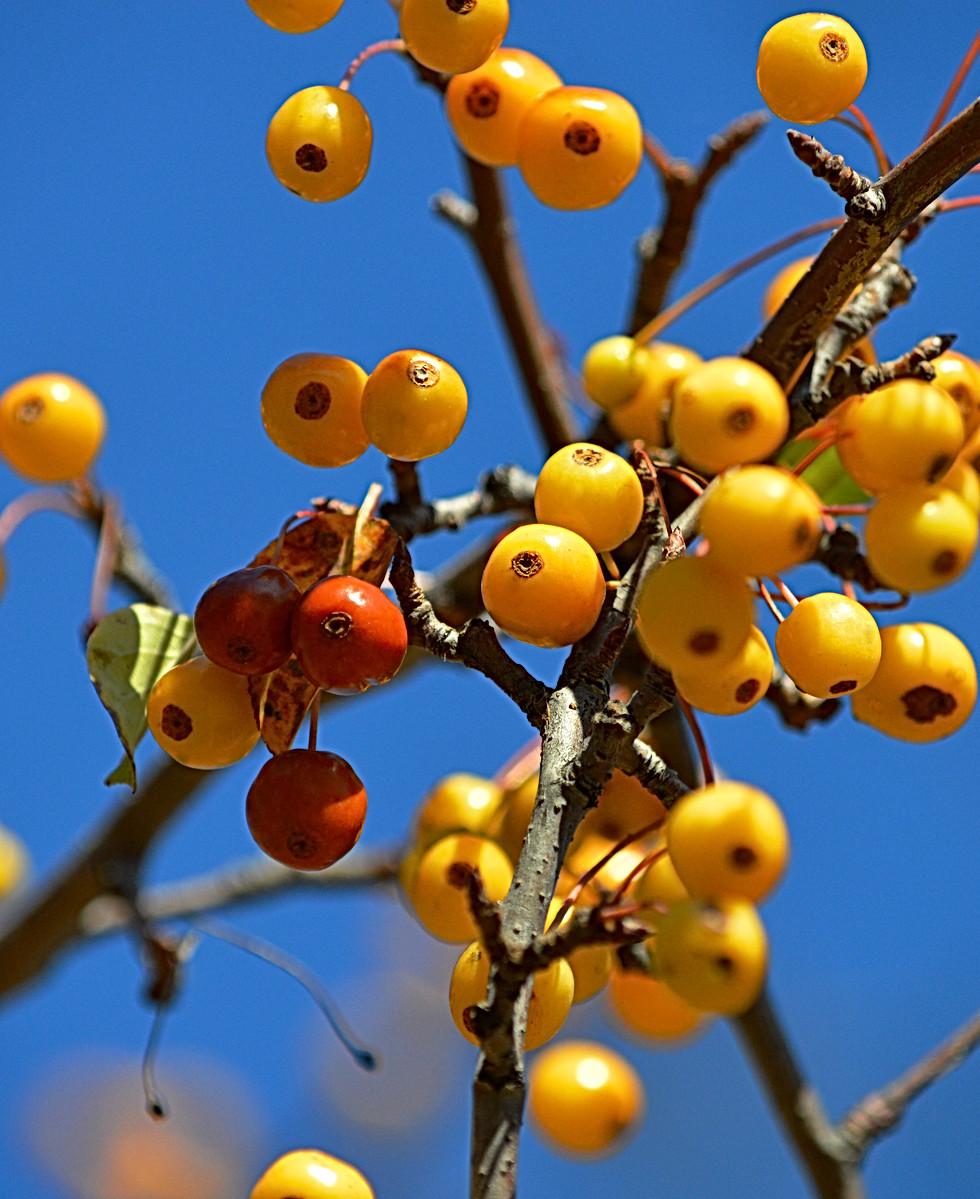 Fall's Offerings