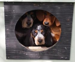 pack o pups (1024x847)