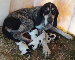 Bell and pups