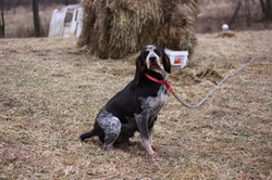 BLUETICK REMINGTON
