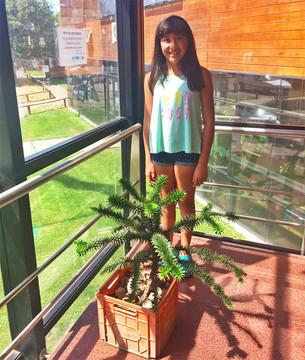 Una familia restituyó una araucaria al PNL