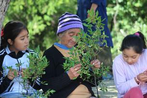 Recolección de semillas y jornada educativa en Quila Quina