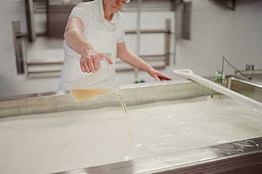 Cheese Making_02