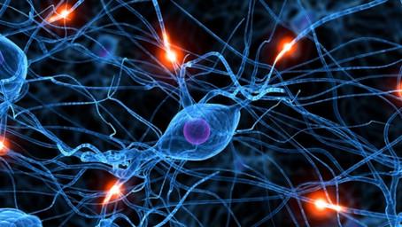 뇌가 스스로 변한다고?