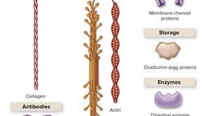 단백질의 모습을 파헤친다! : 단백질 분자 모델링