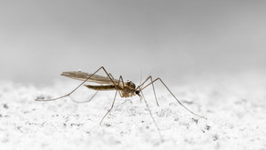 모기 기피제… 아무 데나 뿌려도 된다?