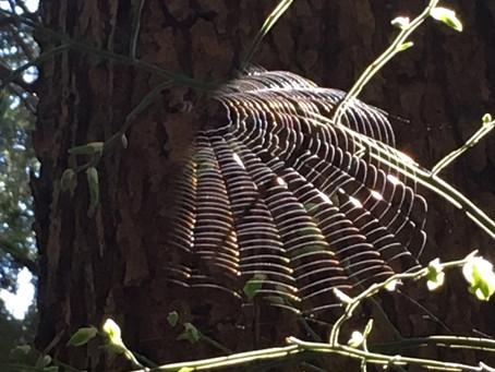 Spider Keeps Showing Up