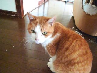 成人式(猫編)
