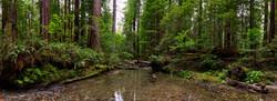 Bull Creek #2