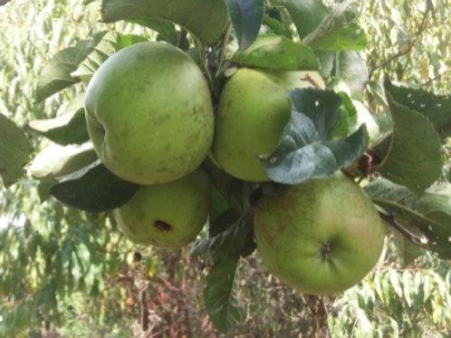 Ballarat Apple