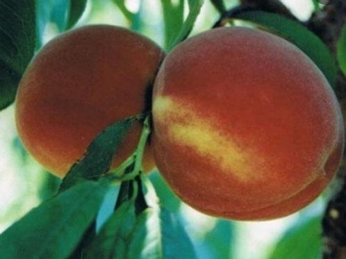 Romestar Peach