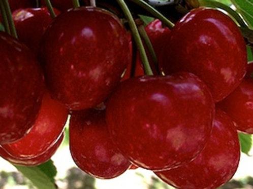 Rosann Cherry