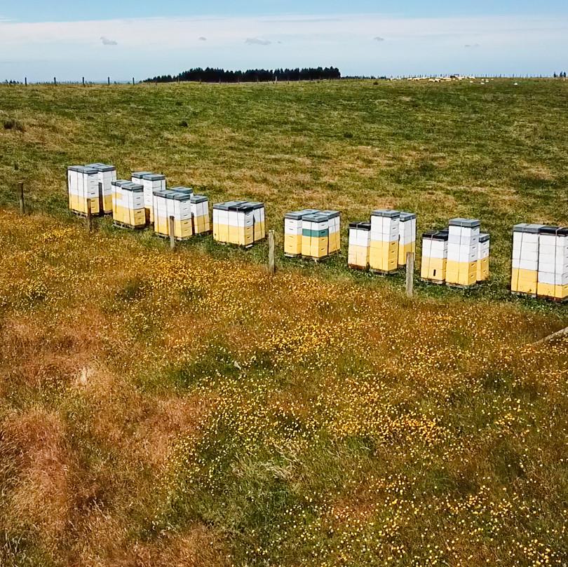 Hives%20DUH.jpg