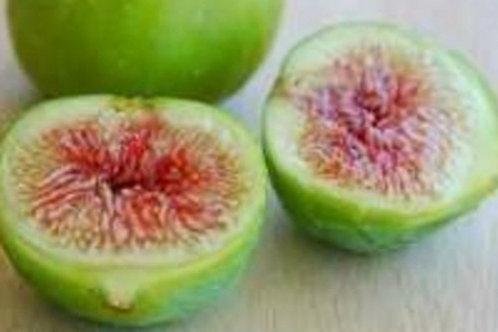 Ventura Fig