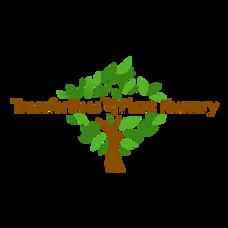 Trees4beesPlantNurseryLogo.png
