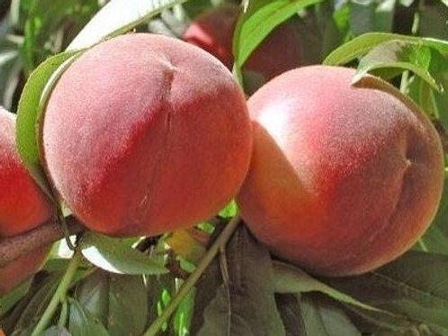 Spring White Peach