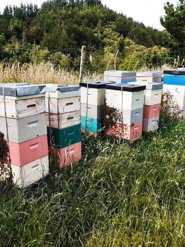Bees on hives